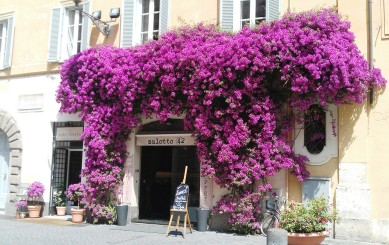 Entrance to Salotto 42 restaurant with flowers